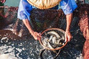 Ba-Jia Leisure Fish Farm