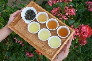 Xing Yuan Tea Farm