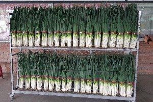 Spring Onion Farm
