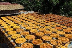 Weiweijia Dried Persimmon Edcational Farm