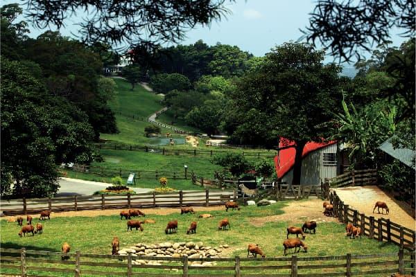 Flying Cow muslim-farm-19