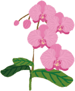flower-orchid-01