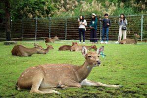 Bambi Land