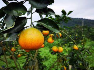 Dajin Agriculture Leisure Area