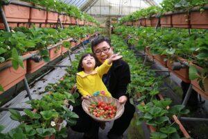 Farmily Farm