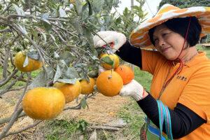 Fu's Orange Farm