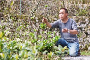 Terraced Field Flower Ecological Farm