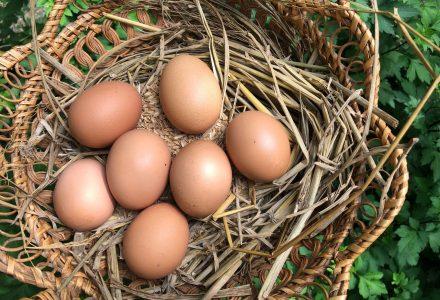 好時節_雞蛋
